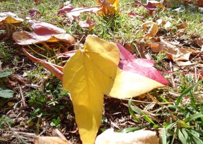 Autumn leave on ground